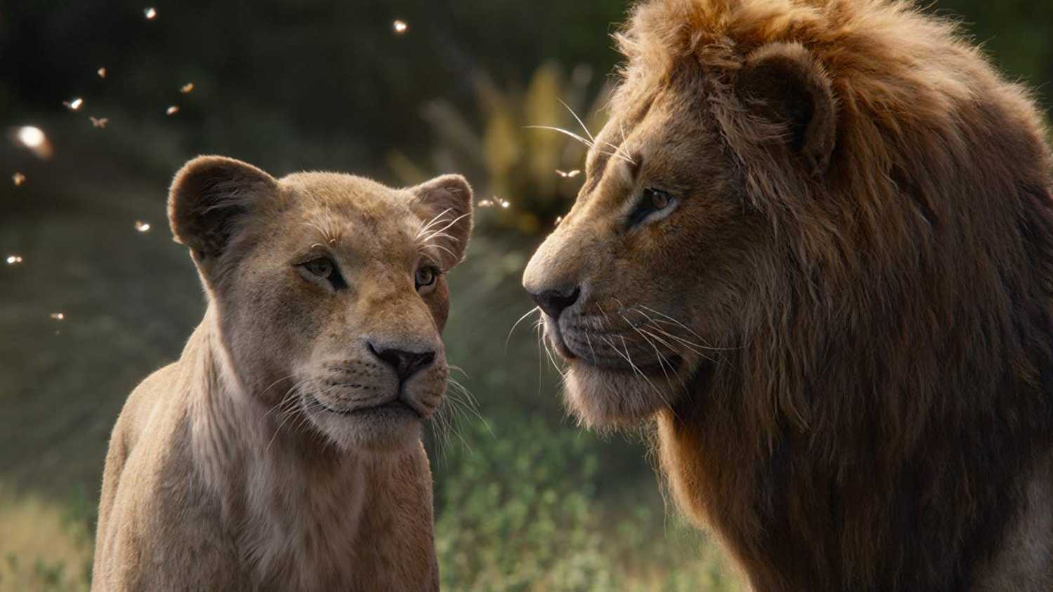 Lion King 2019: Lies take away the position of the lioness - Beauty Magazine